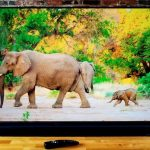 Top 3 best 65-inch TV for 2021: TV Buyers Guide